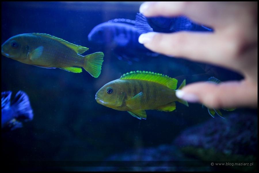 fotografia ślubna rybki